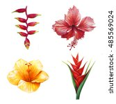 exotic villa flower set  red... | Shutterstock . vector #485569024
