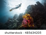 free diver exploring vivid... | Shutterstock . vector #485634205