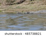 Gharial On The Rapti River ...