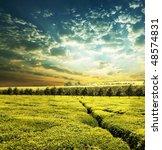 tea plantation | Shutterstock . vector #48574831