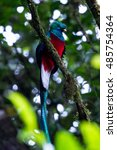 resplendent quetzal perched on... | Shutterstock . vector #485754364