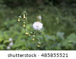 forest of korea | Shutterstock . vector #485855521