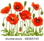 Vector Spring Flowers  Poppy