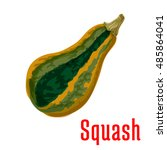 ripe squash vegetable icon of... | Shutterstock .eps vector #485864041