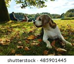 Dog On Picnic In Autumn