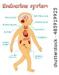 human endocrine system for kids.... | Shutterstock .eps vector #485919925