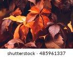 Close Up Of Autumn Virginia...