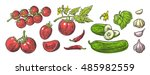 cucumbers  garlic  chili and... | Shutterstock .eps vector #485982559