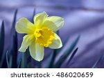 Yellow Single Flower