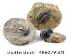 Three Different Trilobite...