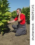 Small photo of Farmer or agronomist examine blossoming tobacco plant in field and speaking by mobile phone