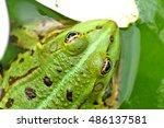 green water frog | Shutterstock . vector #486137581