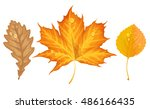 Autumn Leaves Fall From The...