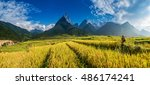 beautiful rice field landscape  ... | Shutterstock . vector #486174241
