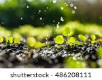 plant sprouts in the field and ... | Shutterstock . vector #486208111