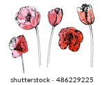 Red Tulip Set. Realistic Hand...