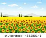 illustration of sunflower field | Shutterstock .eps vector #486280141