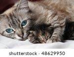 Stock photo cat and her kitten 48629950