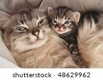 Stock photo cat and her kitten 48629962