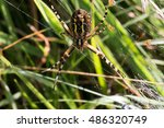 Bottom Of A Wasp Spider Out Of...