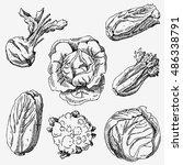 set of hand drawn vegetables.... | Shutterstock .eps vector #486338791