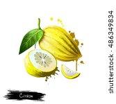 citron isolated on white.... | Shutterstock . vector #486349834