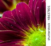Close Up Of Flower Petals With...