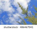 Ginkgo Biloba Tree Green Leave...