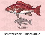 red snapper. vector... | Shutterstock .eps vector #486508885