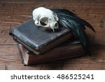 Cat Skull  Old Books And Crow...
