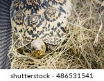 animal   tortoise   close up of ... | Shutterstock . vector #486531541