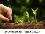 Small photo of Seedling and Plant sprout growing step over green background