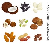 nuts  grain and kernels. vector ... | Shutterstock .eps vector #486567727