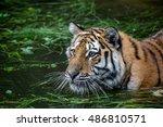 tiger | Shutterstock . vector #486810571