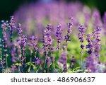 natural flower background.... | Shutterstock . vector #486906637
