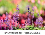 amazing nature view of red and... | Shutterstock . vector #486906661