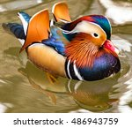 Closeup Of  Vibrant Mandarin...