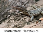varanus salvator | Shutterstock . vector #486959371