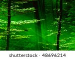 lights of the forest | Shutterstock . vector #48696214