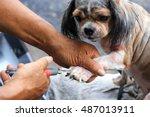 dog nail clipper | Shutterstock . vector #487013911