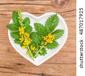 Small photo of Homeopathy and cooking with agrimony