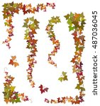 hanging branches of autumn ivy... | Shutterstock .eps vector #487036045