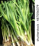 Small photo of background of organic Freshly lifted leeks allium ampeloprasum in a vegetable garden variety Musselburgh on display for sale at local farmer's market departmental store