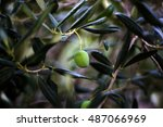 organic olives in ivan dolac... | Shutterstock . vector #487066969