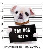 bad dog. | Shutterstock . vector #487129939