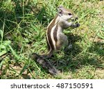 Little Chipmunk Sits Among The...
