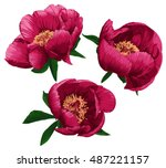 peony set. vector illustration | Shutterstock .eps vector #487221157