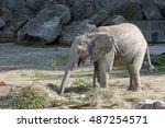 Baby Elephant Sticking It's...