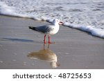 australian silver gull at the... | Shutterstock . vector #48725653