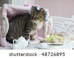 sweet domestic cat with hat in... | Shutterstock . vector #48726895